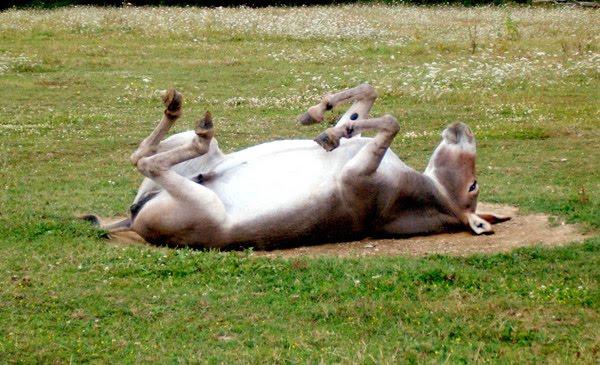 relaciones sexuales con un burro , informó hoy la prensa local